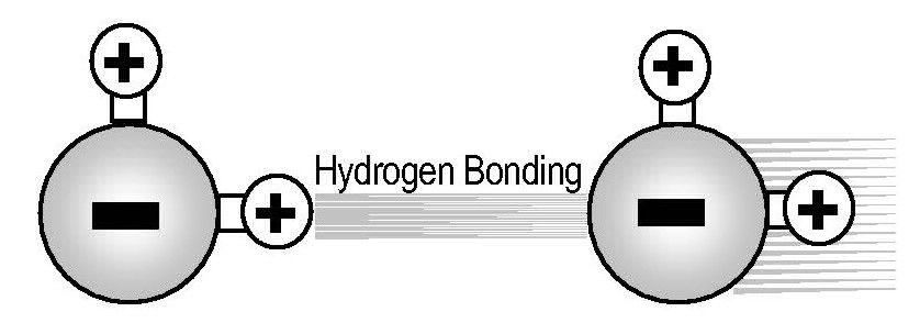 Image of Hydrogen Bonding in Revitalized Structured Water